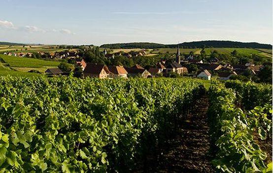 In crescita l'import di vini alsaziani