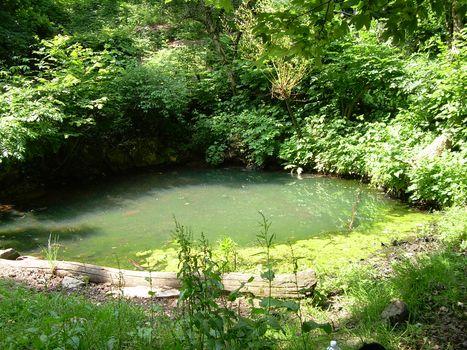 Tra gli anfibi del Parco dei Colli di Bergamo