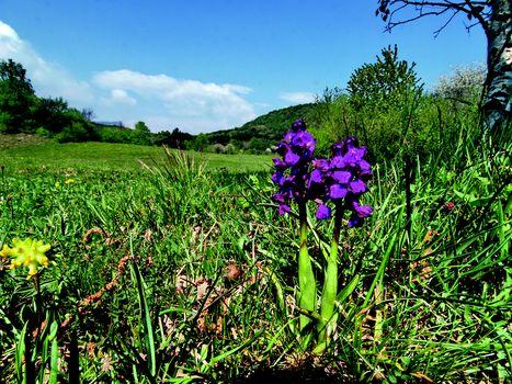 Insieme al Fab sull'altopiano delle orchidee