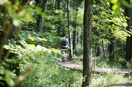 Milano, il rapporto sulle foreste lombarde
