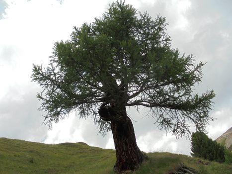 Patriarchi Arborei, mostra sugli alberi secolari
