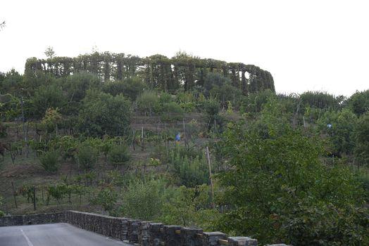 Parco dei Colli, si scoprono i roccoli