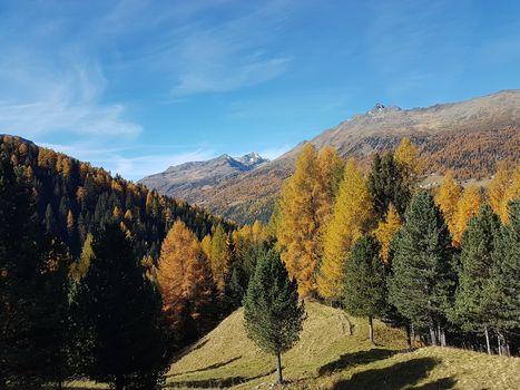 In Lombardia il bosco è in crescita