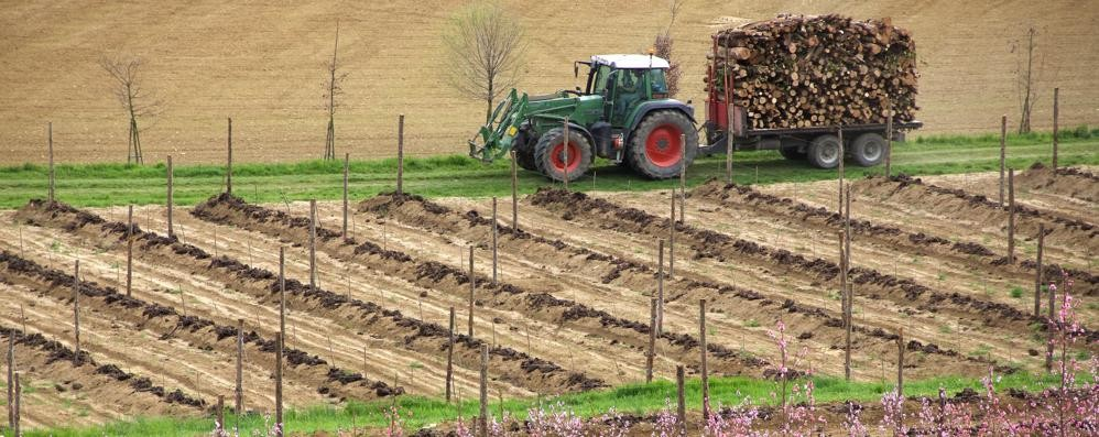Risultati immagini per AGRICOLTURA ITALIANA