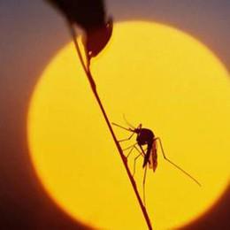Le zanzare portatrici del virus del Nilo Individuate a Martinengo e Fontanella