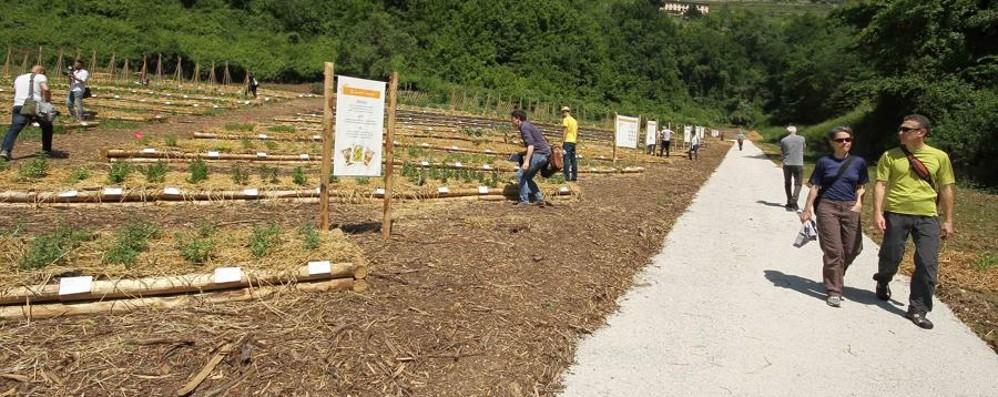 Le foto dell'Orto botanico di Bergamo per il più grande concorso mondiale