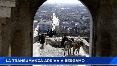 La capra protagonista del festival del pastoralismo a Bergamo