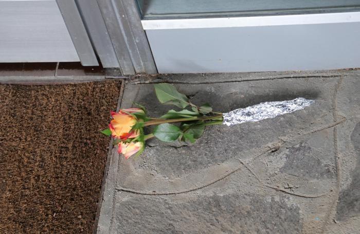 Bergamo, donna uccisa a coltellate