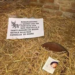 Carvico, rubato l'asinello dalla capanna Alpini ironici: «Portato via dal fratello»