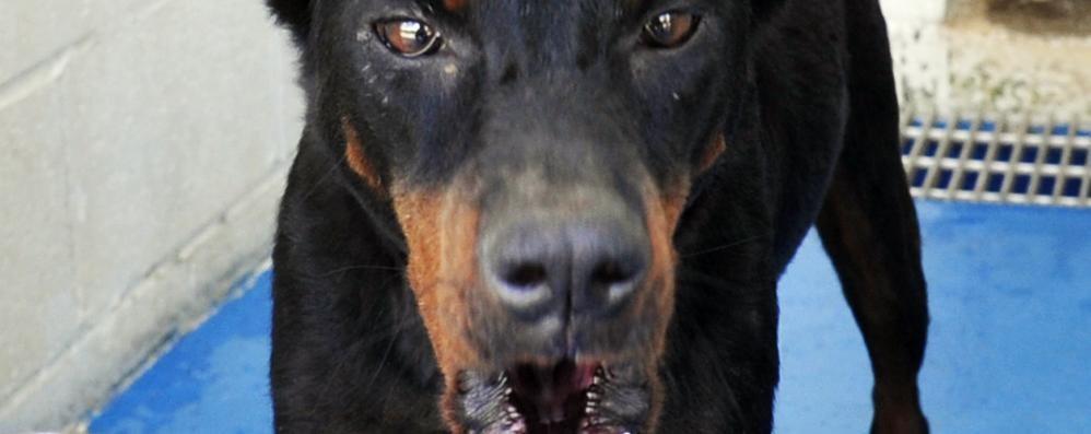 Entra in casa (altrui), il cane lo azzanna e lui che fa? Chiede anche i danni...