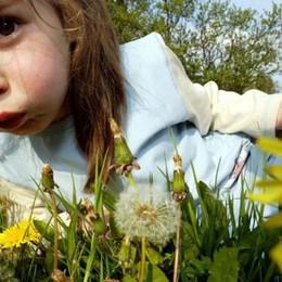 Meteo: tempo più stabile e mite Ma anche più polline: allergie fastidiose