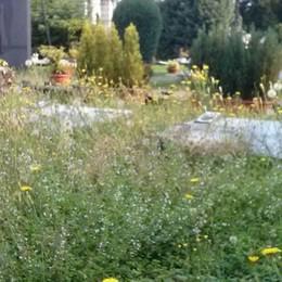Cimitero di Stezzano, l'addetto lascia  Sulle tombe erba alta... e  leprotti