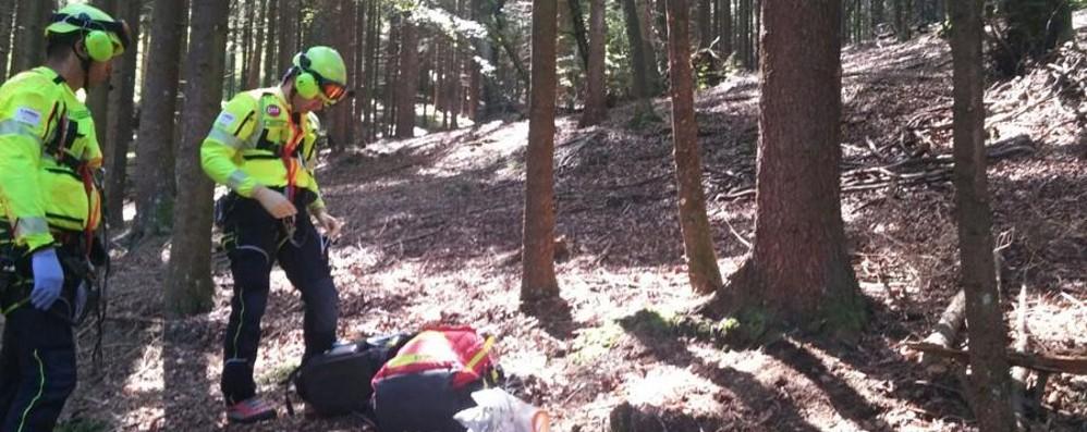 Shock anafilattico dopo punture di insetti 60enne muore in un bosco a rovetta valle seriana - Punture di insetti nel letto ...