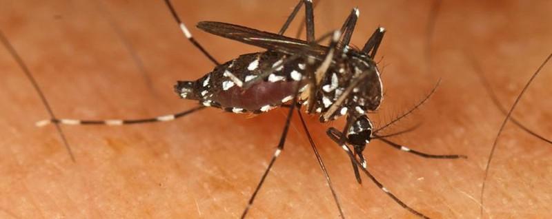 Zanzara tigre, non è finita Nei prossimi giorni arriva il picco