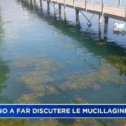 Fanno discutere le mucillagini nel lago d'Iseo