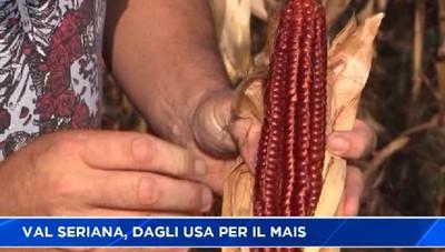 Dagli Stati Uniti alla Valle Seriana per studiare il mais