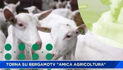 Torna su BergamoTv Amica Agricoltura venerdì alle 22 e domenica alle 21.30