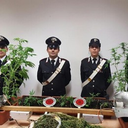 In casa coltivava marijuana Arrestato 40enne a Capriate