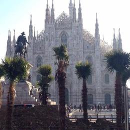 Ecco le palme in piazza Duomo E Milano si divide: che c'entrano?