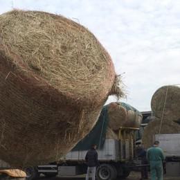 Da Treviglio, 150 quintali di fieno per gli allevatori di Amatrice