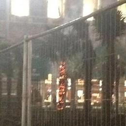 In fiamme tre palme in piazza Duomo L'incendio dopo le polemiche