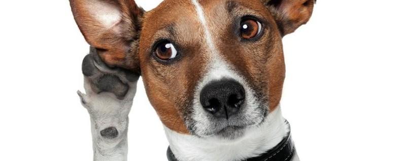 Il comando per un cane badate non una supplica amici - Colorazione immagine di un cane ...