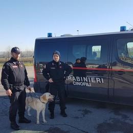 Controlli antidroga nelle scuole Carabinieri in azione a Treviglio