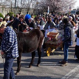 Asino e galline sul carro di Carnevale Scoppia la polemica in Rete