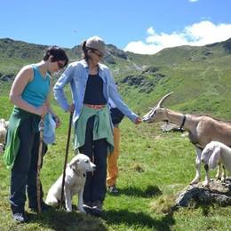 Vuoi fare un'estate in alpeggio?  Progetto Pasturs, iscrizioni fino il 7 aprile