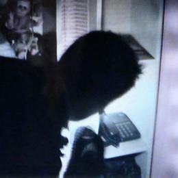 Bagnatica, 15enne sventa furto in casa Nascosto sotto il letto chiama il 112