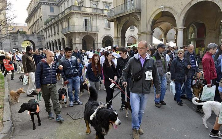 Amici a 4 zampe insieme a Bergamo Domenica  tutti alla Corri Dog