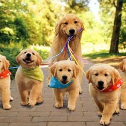 A Seriate il «Puppy's Day» Corso gratuito per i cuccioli