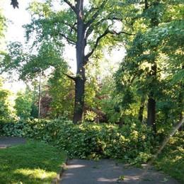 Cade un albero al parco Suardi Il danno causato dal temporale