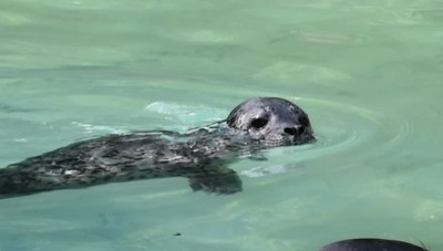 I due cuccioli di foca