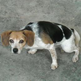 Rota Imagna, botte al cane Iolanda salvata dai carabinieri