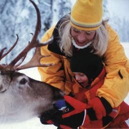 Umeå, la terra dei sami  Una vita con le renne