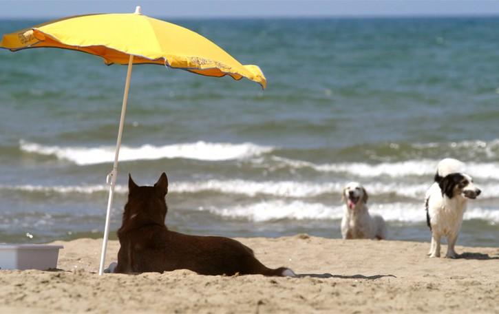 Buone vacanze con i nostri amici