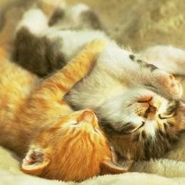 Via al processo dei killer dei gatti Sarà prodotta consulenza psichiatrica