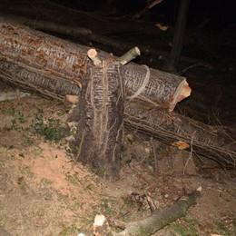 Peia, taglia legna col figlio e un amico Cade una pianta e resta schiacciato