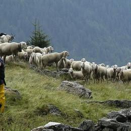 Sotto un albero durante il temporale Cade fulmine, morte 60 pecore