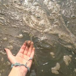 Lago d'Iseo, Legambiente critica «Metà dei punti fortemente inquinati»