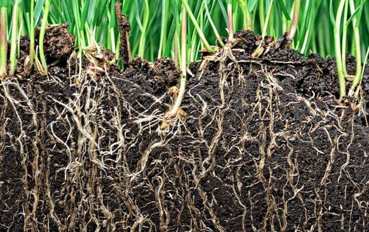 Conoscere il nostro suolo è cultura dell'ambiente