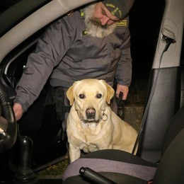 Notte di controlli fuori dai locali -Video In campo anche il labrador anti-droga