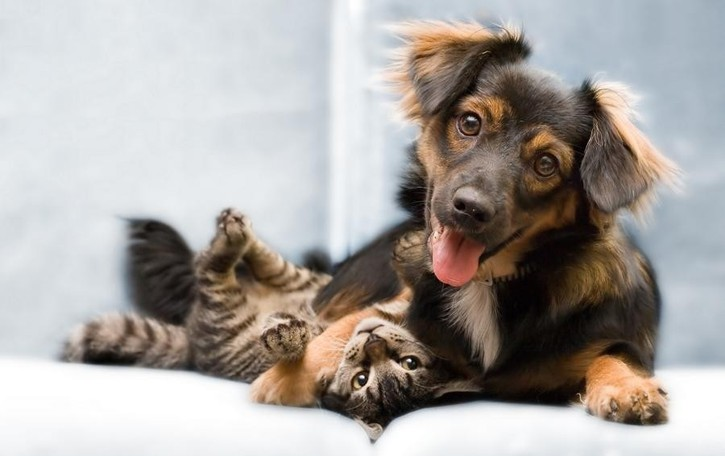 Volete regalare un cane? Ecco la guida per non sbagliare