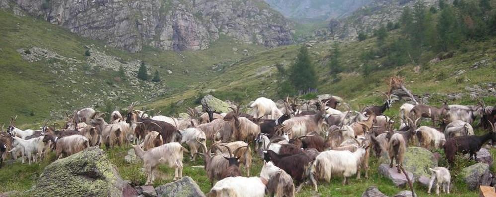 Volete passare tre mesi con i pastori? C'è un progetto su misura per voi
