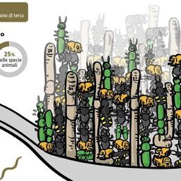 Terreno vivente, sotto i nostri piedi la prima forma di florida comunità