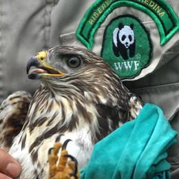 Valpredina, confermati i fondi Il centro che cura gli animali  è salvo