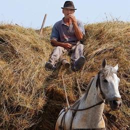 Il contadino batte la globalizzazione Un italiano su 4 fa la spesa in fattoria