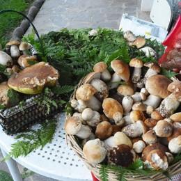 Raccolta funghi per i non residenti In Val Brembana ticket da 10 a 60 euro