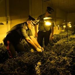 Scoperta piantagione di marijuana Arcene, i carabinieri arrestano 57enne